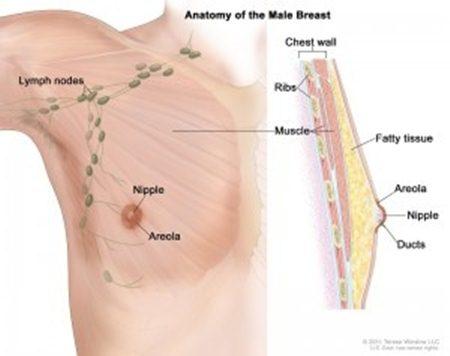 Obat pencegah kanker payudara, tanda2 kanker payudara stadium 4, ciri kanker payudara stadium 2, www.obat tradisional kanker payudara.com, kanker payudara apakah bisa disembuhkan, kanker payudara stadium 2b, ramuan tradisional mengobati kanker payudara, kanker payudara pada pria pdf, cara mengobati kanker payudara setelah operasi, cara mengobati kanker payudara dengan daun sirsak, kanker payudara menyusui bayi, obat herbal sakit kanker payudara, obat kanker payudara tamoxifen