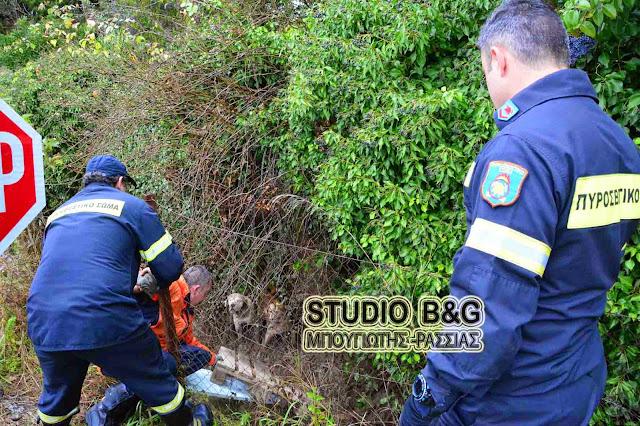 Επιχείρηση της πυροσβεστικής στο Άργος για δύο μικρά κουταβάκια