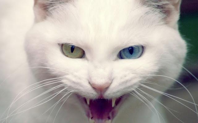 Un estudio revela que tu gato quiere matarte