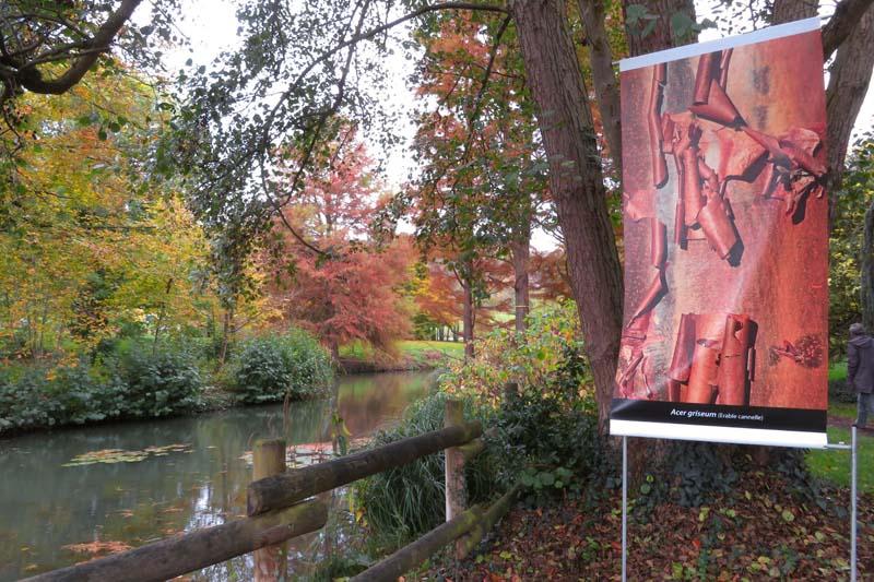 Vu Par Mamlea Cypres Chauve Au Jardin Botanique De Nancy