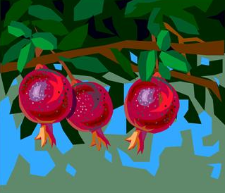 pomegranate fruit tree