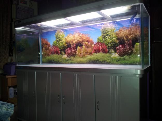 Marine fish tank maintenance 6 foot 2017 fish tank for Pet supermarket fish tanks