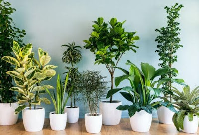 The Best Choice Of Indoor Plants For Low Light For Apartments