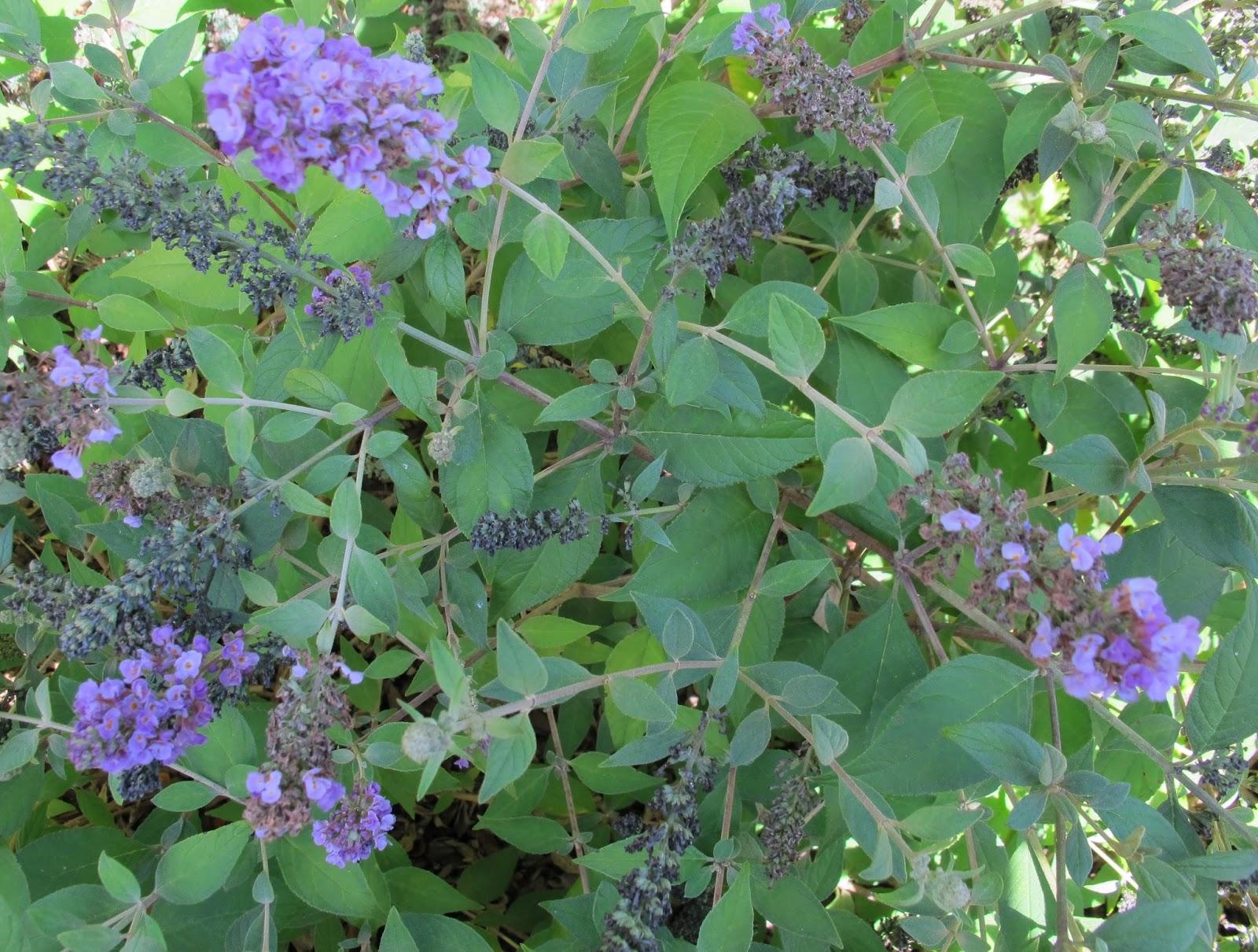 Garden Bloggers Bloom Day September 2013