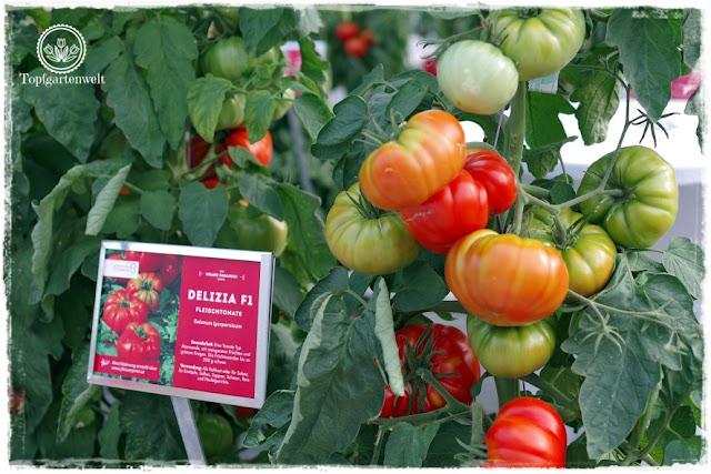 Gartenblog Topfgartenwelt The Grand Paradeis Show: Tomatensorte Delizia F1