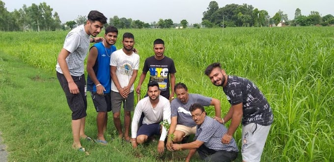 The campaign to plant 550 plants dedicated to plantation of 550 trees  started