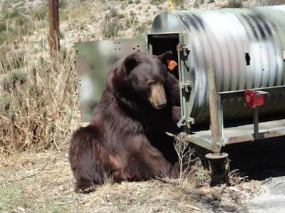 Nutter Stalks Bear Biologist