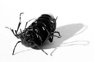 Significado de Soñar con Escarabajos