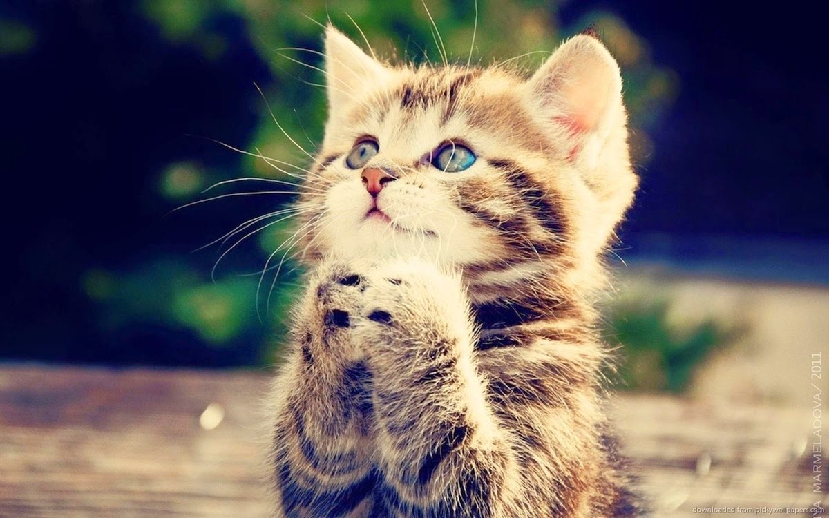 Kopi Hangat Foto Kucing Lucu Imut Dan Menggemaskan