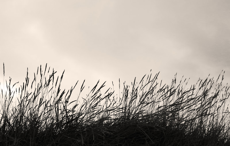 Grass against the sky - monochrome