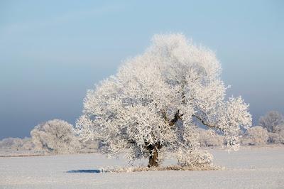 Schnee, Winter, Winterlandschaft