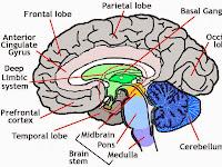 Head Diagram