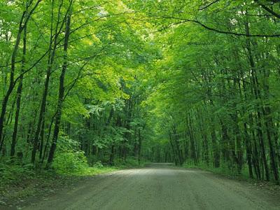 Memilih Jalan ke Hutan Yang Indah