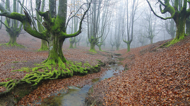 Fog Forest Landscapes