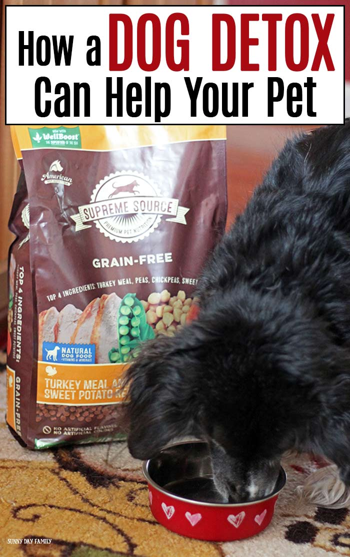 Help your pet feel better inside and out with a dog detox challenge from Supreme Source! Find out how healthy habits and the right food can make your dog feel his best. #ad #SuperFoodSwitch #IC