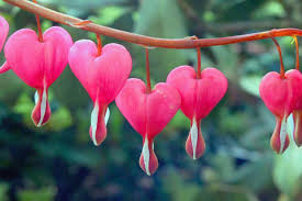 Nama bunga dalam bahasa arab dan artinya