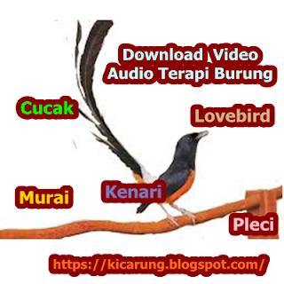 Audio Terapi Burung Populer