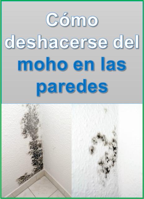Cómo deshacerse del  moho en las paredes