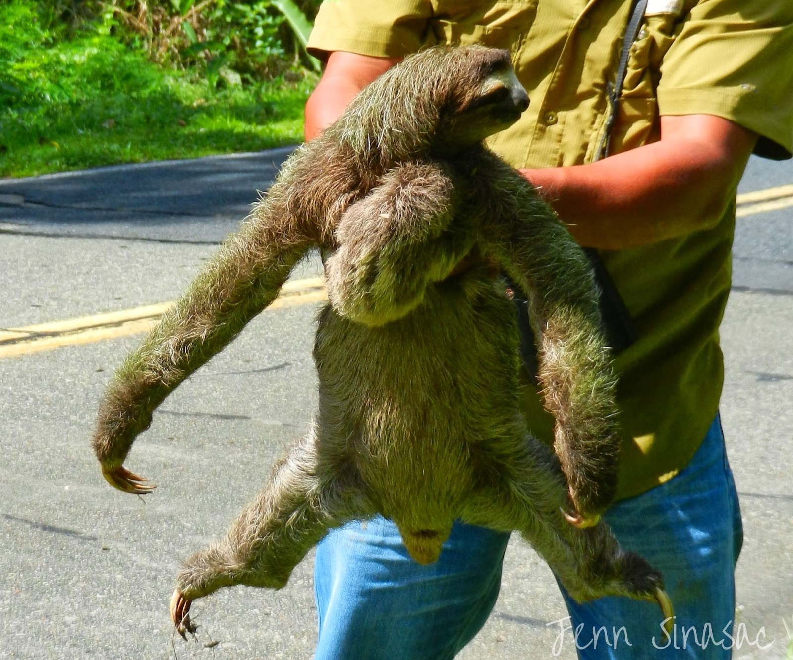 Experience Nature: Sloth Rescue
