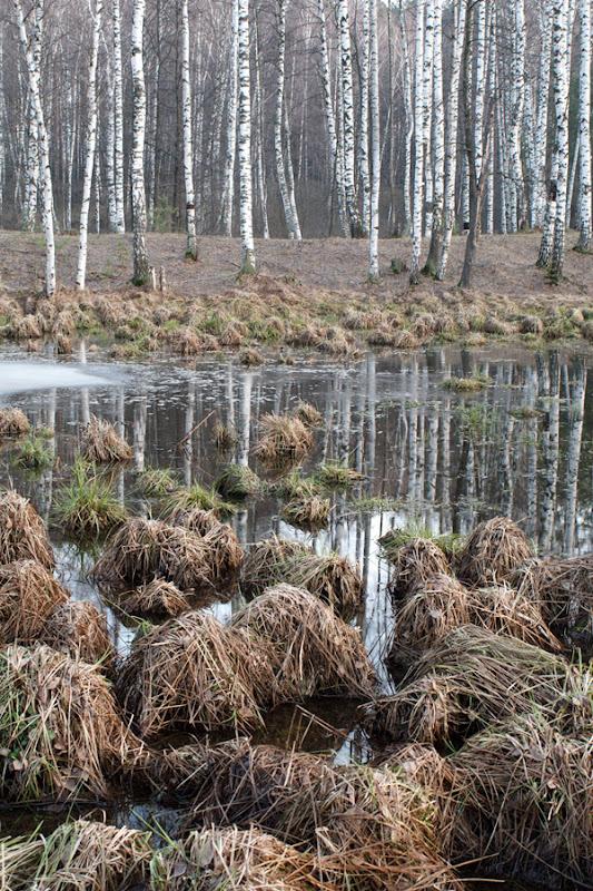 Кочки на осеннем болоте.