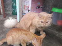 Inilah Alasan Mengapa Induk Kucing Memakan Anaknya Sendiri Yang Baru Lahir