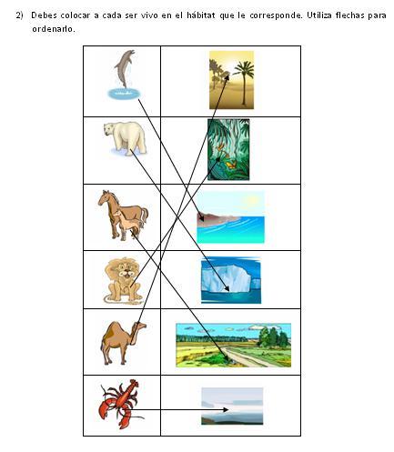 fotos animales mamiferos para imprimir