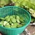 Tìm hiểu những món ăn được chê biến từ loại đậu hạt nổi tiếng khu vực Đông Nam Á