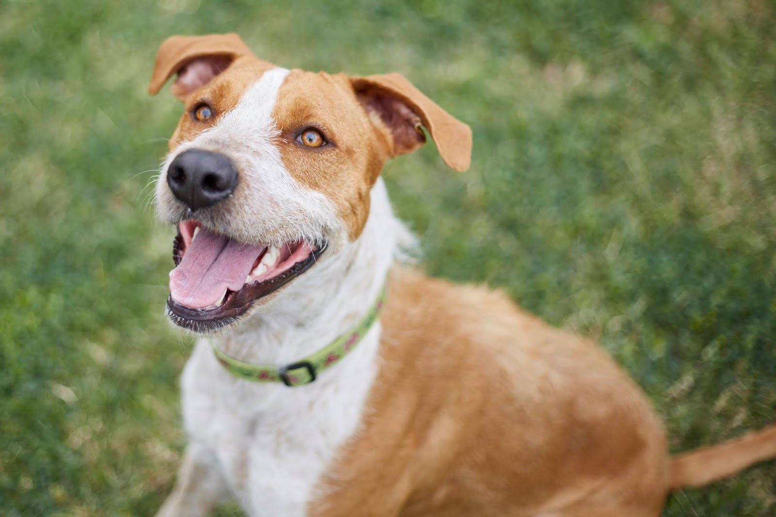 RSPCA Clear the Shelters 2018 - Feb 23 to 25 | Australian Dog Lover