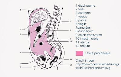 peritoine anatomie infirmier