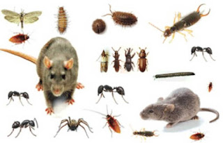 pest_insect_rat_repeller