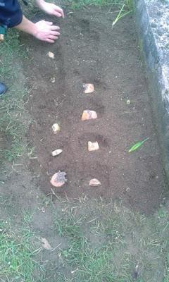 Le patate sono l'ortaggio più facile da seminare