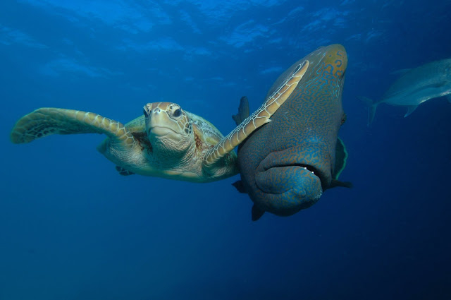 """Winner of The Padi Under The Sea Category """"Slap"""" by Troy Maine"""