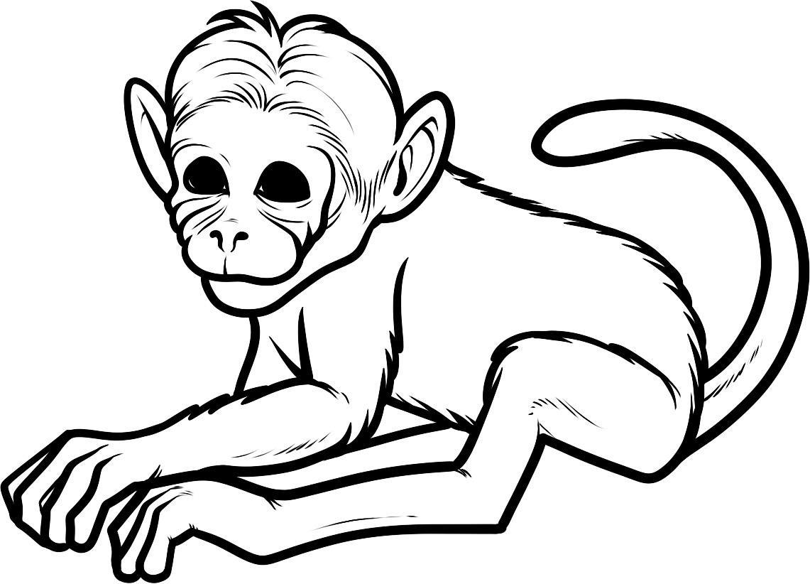 Ahmedatheism Mewarnai Gambar Jambu Monyet