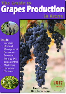 grapes farming guide kenya