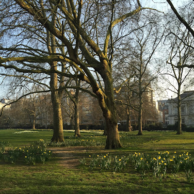 Green Park in Spring, Daffodils, Spring, Sun, Sunshine, Green Park, London