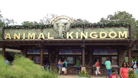 Animal Kingdom entrada