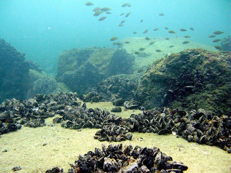 8 lucruri mai puțin cunoscute despre Marea Neagră