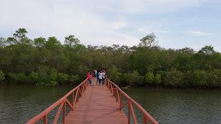 wisata mangoove di pangandaran