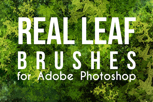 Realistic Leaf Brushes set for Adobe Photoshop