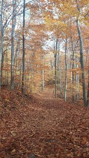 sentier, Parc du Mont-Saint-Bruno, l'automne, feuilles mortes, couleurs d'automne