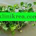 Fakta ilmiah tentang tanaman eceng gondok