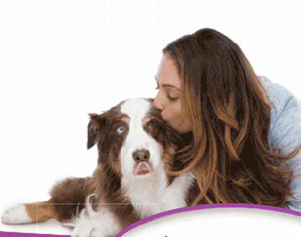 barking-Ways to control your dogs barking,dogs barking big little loud dog mp3 sound effect dog meaning  dog howliing video