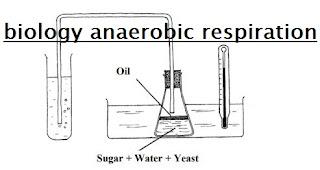 biology-anaerobic-respiration