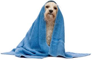 Kupanje pasa Panvet