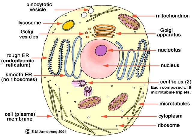 CBSE PHYSICS: Cell A Fundamental Unit of Life Notes for ...