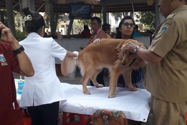 Cegah Rabies, Anjing Peliharaan di DKI Dipasangi Cip