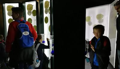Oleoturismo Museo Activo del Aceite de oliva y la Sostenibilidad Terra Oleum