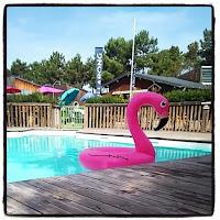 flamant rose gonflable dans la piscine