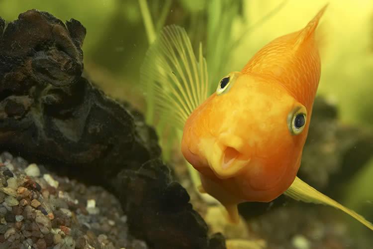 bottom feeding goldfish Nordstrom