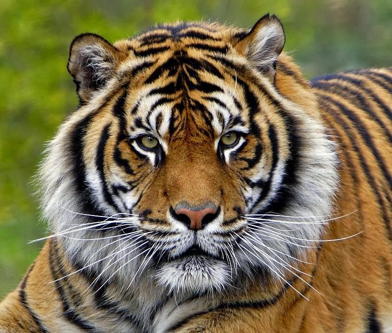 hewan dan tumbuhan yang dilindungi di indonesia